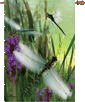 Dragonflies Dreamin House Flag